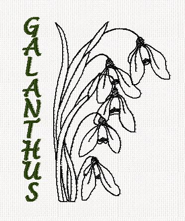 botanical-galanthus-flower-redwork-embroidery