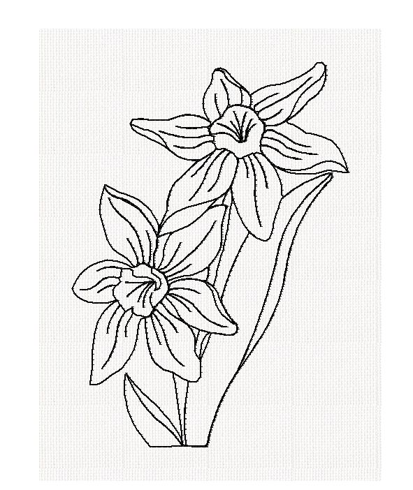 Jonquil Flower Drawing Jonquil-redwork-embroidery