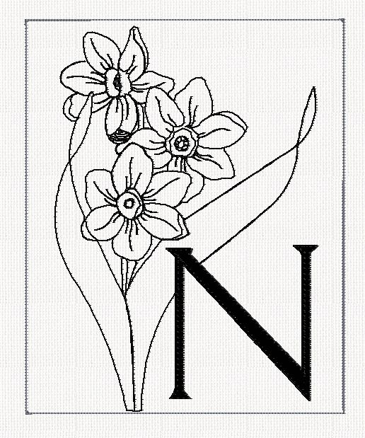 Jonquil Flower Drawing Abc-n-narcissus-filled-flowers