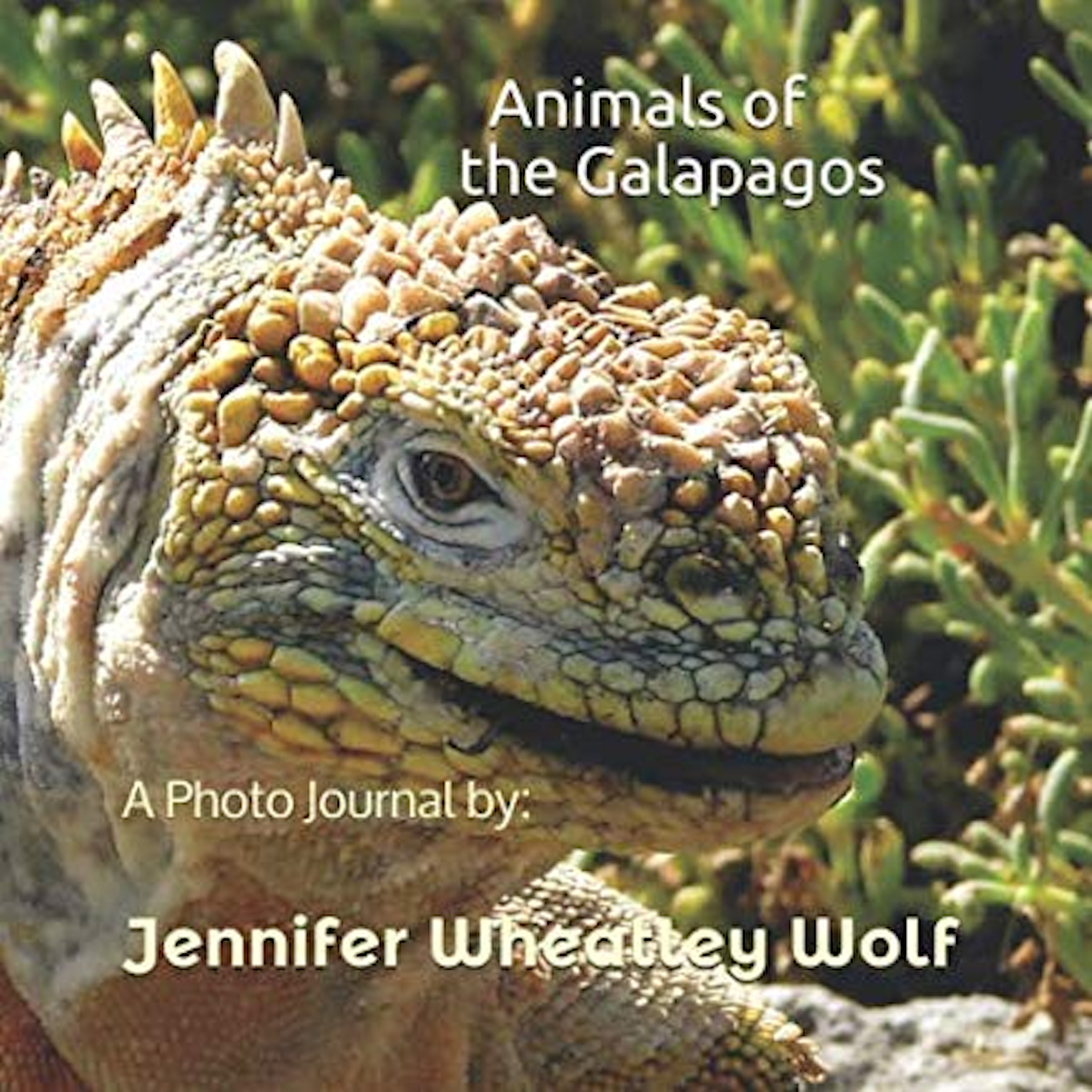 Animals-of-the-Galapagos-A-Photo-Journal-by-Jennifer-A-Wheatley-Wolf